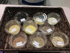 食物栄養専攻で「雑穀」に関する講演会を開催しました
