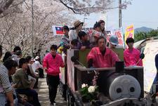 「勝浦町さくら祭り」の運営ボランティアで地域貢献(四国大学ゴールデンZクラブ)