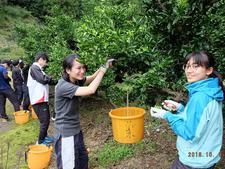 四国大学ゴールデンZクラブが上勝町でユコウ収穫ボランティアを行いました