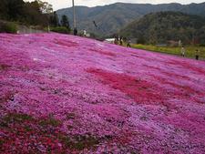 生活科学科デザインコースの学生がポスターをデザインした「広棚芝桜祭り」のオープニングセレモニーが開催されました