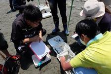 四国大学ゴールデンZクラブが吉野川河口干潟の生物観察・調査ボランティアに参加しました